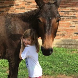 Turning Pointe Donkey Rescue | Donkey Rescue and Adoption